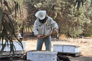 Lin's Farm Beekeeper.JPG