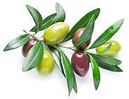 Lin's-Farm-olives.jpg