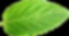 mint-leaf-lins-farm.png