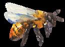 linsfarm-bee.png