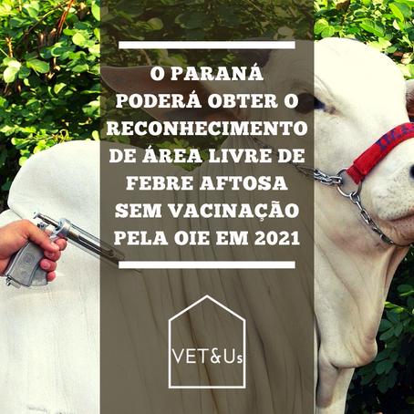 Paraná: Área livre de Febre Aftosa sem vacinação