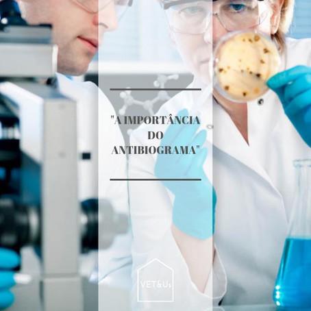 A Importância do Antibiograma