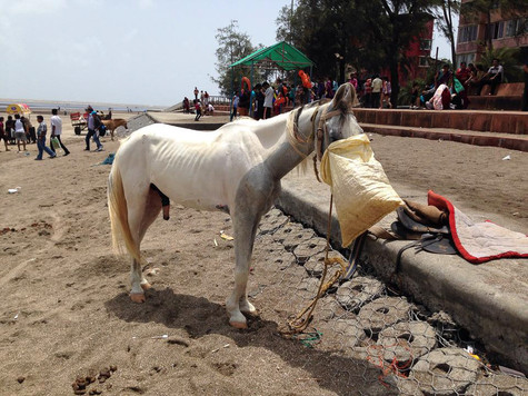 Goa, India. 2014