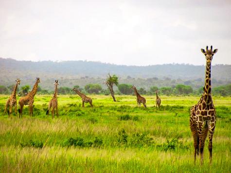 Ngorongoro Crater, Tanzania. 2009.