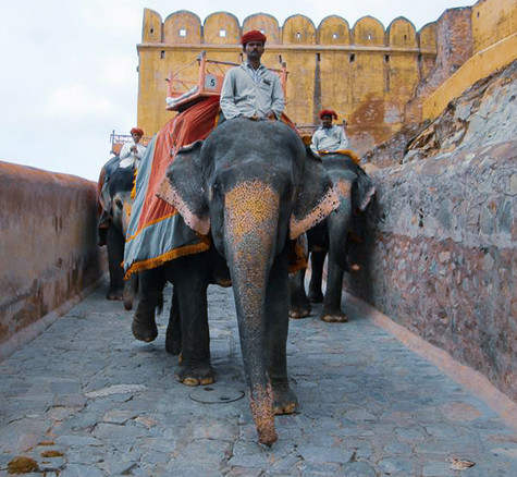 Jaipur, Rajasthan, India. 2014