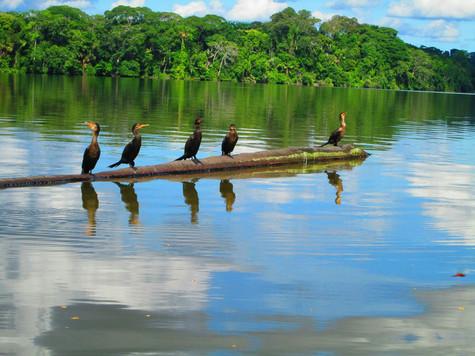 Peruvian Amazon. 2013