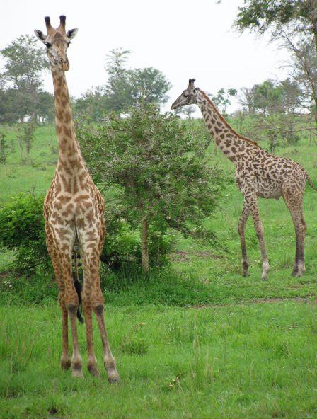Ngorongoro Crater, Tanzania. 2009