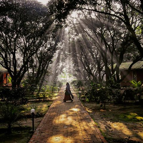 Bagan Orchard, Uttar Pradesh, India. 2015