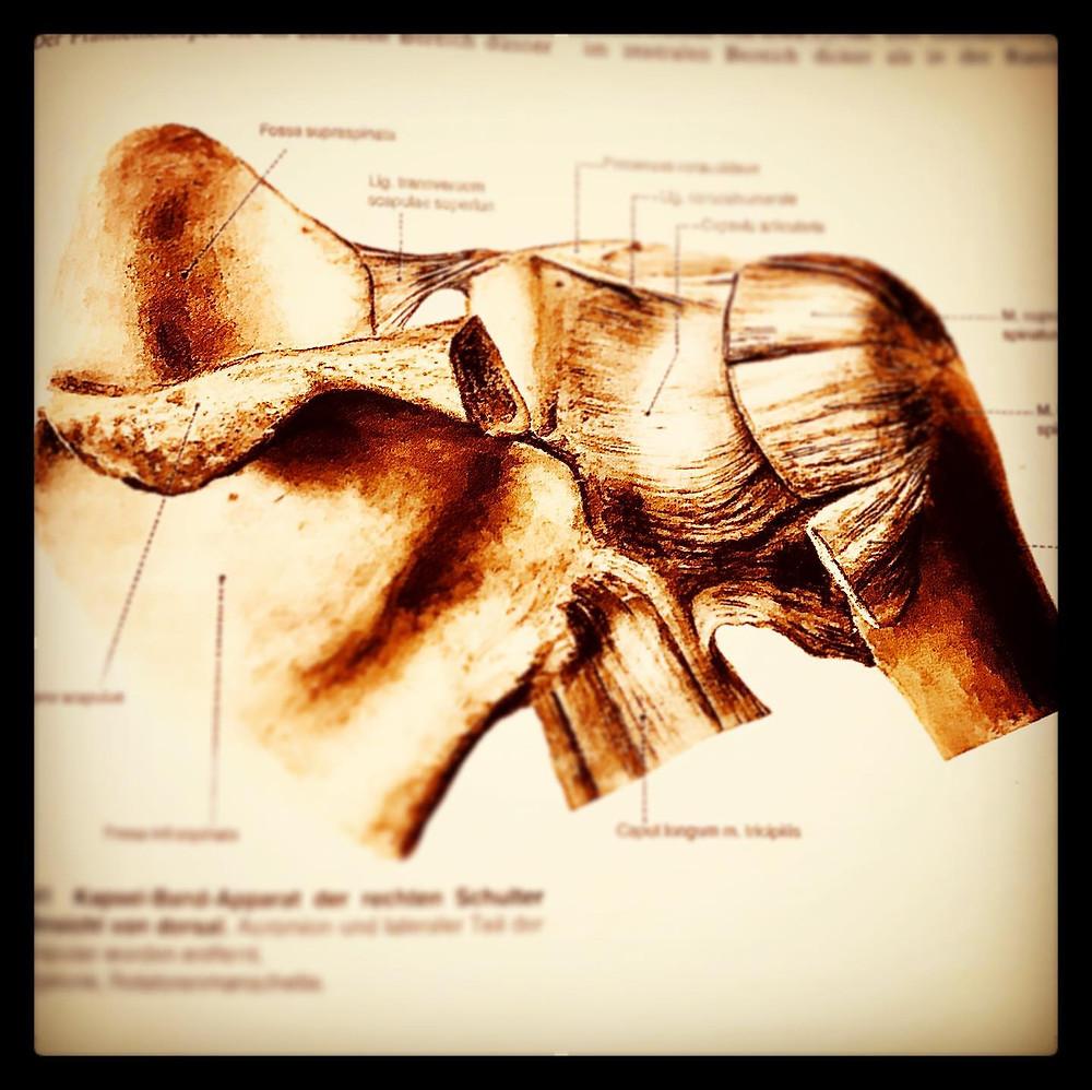 frozen shoulder physiotherapie oberwil sportphysio