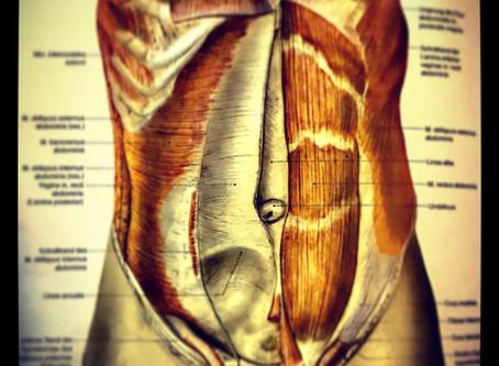 Rektusdiastase- mit gezielten Übungen zu mehr Kraft und straffem Bauch