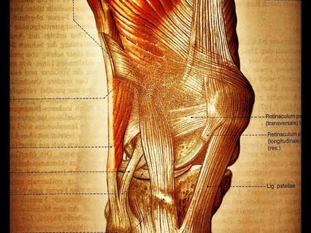 Kniescheibenschmerzen – Training ist die beste Medizin