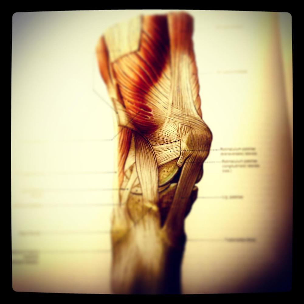 kreuzbandriss physiotherapie radiuszwei oberwil
