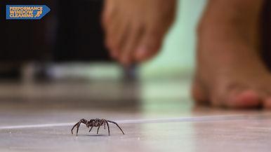 spider-removal-oakville.jpg