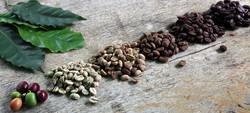 Stadien einer Kaffeebohne