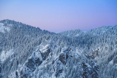 Winterwald im Abendlicht