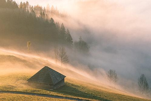 Stall im Nebel