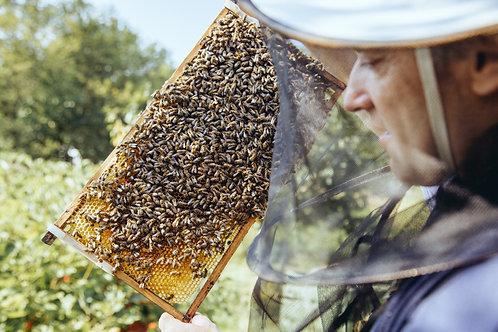 Honigsüße Herzlichkeit II