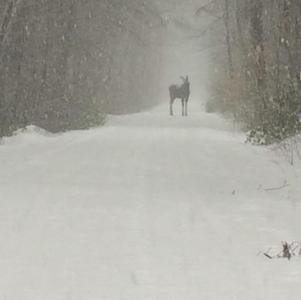 Wilton Trail User