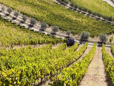 Curso: Vinho Português, uma Visita Guiada