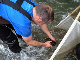 freshwater mussels, kentucky