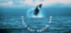 TOSS_HUmpback_Banner.png