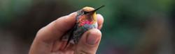 YOSEMITE BIRD STUDY