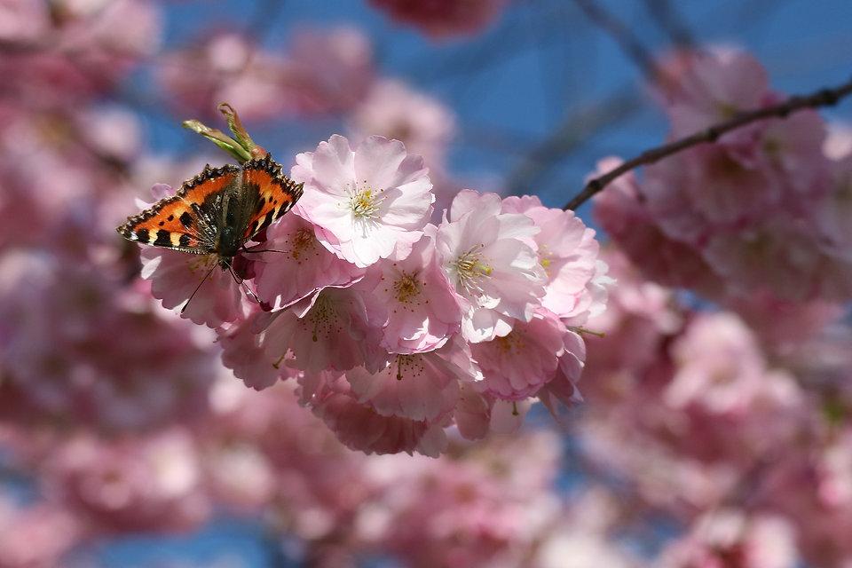 butterfly-2193462_1920.jpg