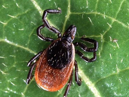 101: Lyme Disease 411