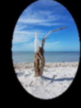 Marco Island artist, fine art, underwater photography art