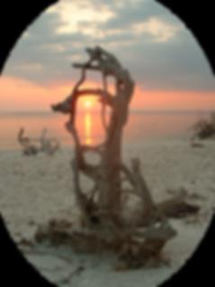 Marco Island artist
