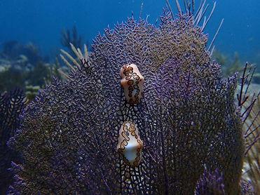 Denise Santos Designs, underwater photographer, marco island, florida