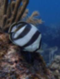 Marco Island underwater photography
