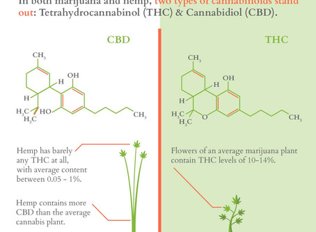 FINALLY! The difference between Hemp and Cannabis explained.