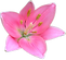Lily Rose Jolie