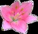 Liten rosa blomst
