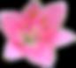 Temmelig Pink Lily