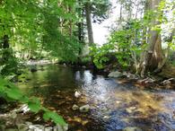 Rivière en bas de la parcelle de forêt