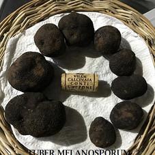 Truffe-Noire-Melanosporum.jpg