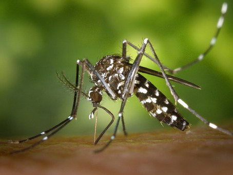 Treat ticks mosquitoes and more with plants!!!