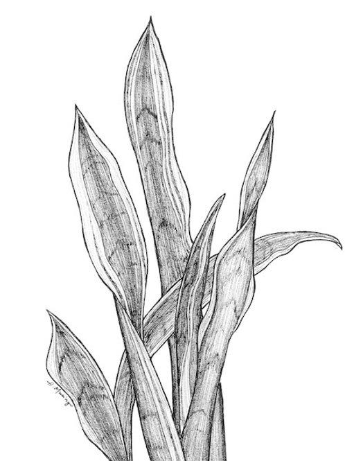 Sword Plant