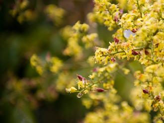 Suffering from seasonal allergies?