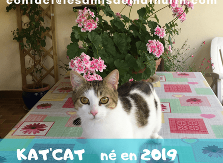 Kat'Cat