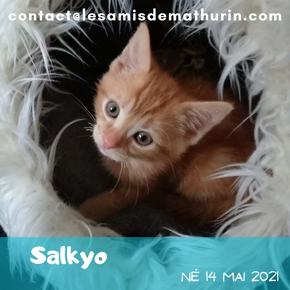 Salkyo