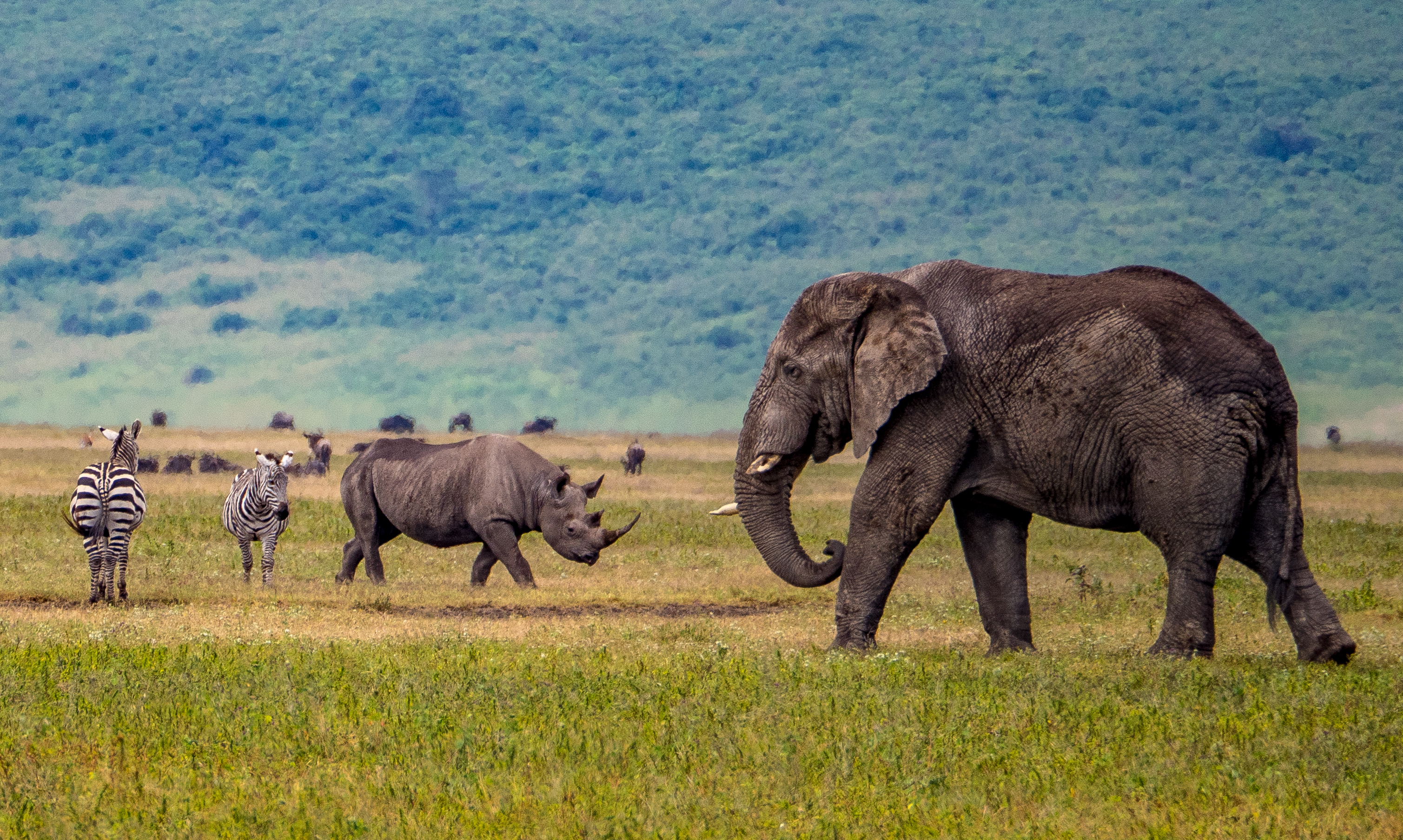 Ngorongoro rhino, elephant, zebra
