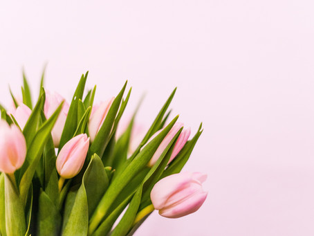 elevate's Spring Newsletter