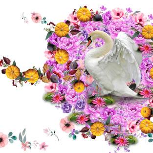 Wisdom of the White Swan