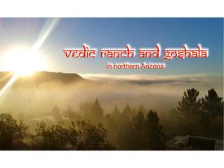 Vedic Ranch Hosts Zebu Herd
