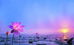 lotus on water, beautiful.jpg