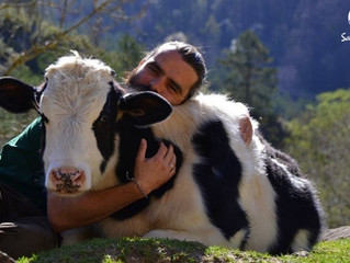 7 Fascinating Things You Never Knew About Cows