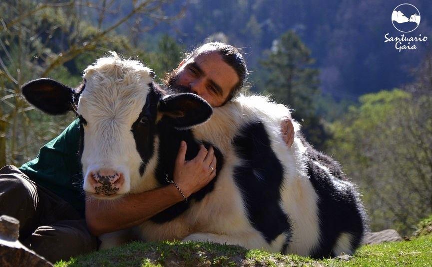 cows-love-cuddles.jpg